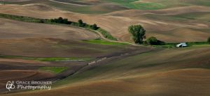 Palouse Fields #1001