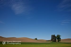 Palouse Fields #1041