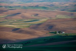 Palouse Fields #1138