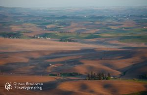 Palouse Fields #1146