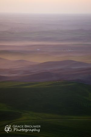 Palouse Fields #1158