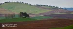 Palouse Fields #1343