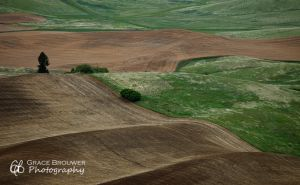 Palouse Fields #1377