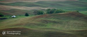 Palouse Fields #1384