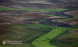 Palouse Fields #1397