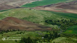 Palouse Fields #1413