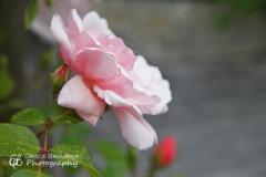 Grace_Joy_Brouwer-2855